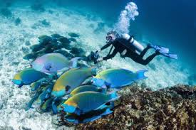 Open Water Diver - Buceoastur.com